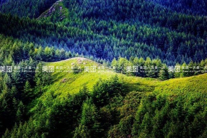 冬季到来,松树更显得伟岸挺拔,茫茫林海,苏木山漫漫雪原,松涛阵阵.