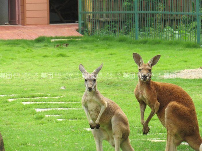 【深圳柳州市动物园,免费享团购详情】柳州市动物园