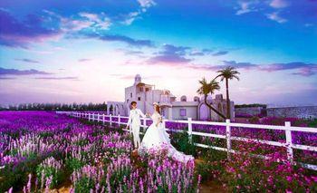 紫海芳庭薰衣草庄园-美团