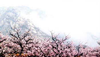 凤凰岭山庄-美团