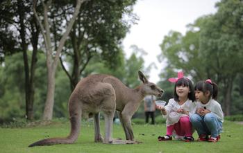 上海野生动物园-美团