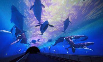 大连圣亚海洋世界-美团