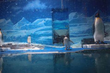小梅沙海洋水族馆-美团