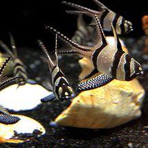 蚌埠海贝海洋乐园-美团