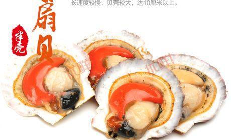 【大连金石诗歌特色】郑州膳食海洋高中自创图片