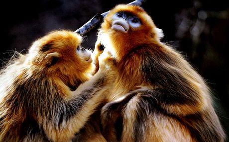 猴子动物世界视频播放