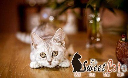 【常州甜心猫吧团购】甜心猫吧代金券团购|图片|价格