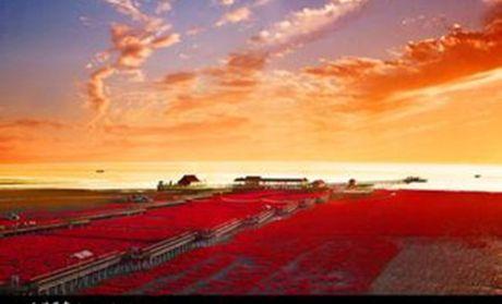 【北京盘锦红海滩廊道自驾票团购】盘锦红海滩风景区