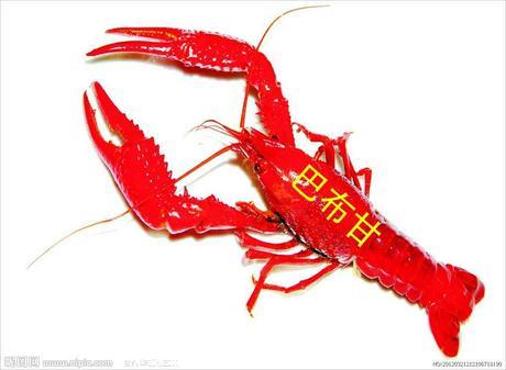 :长沙今日团购:【四方坪】巴布甘龙虾仅售79元!价值100元的代金券1张,全场通用,仅限使用1张,提供免费WiFi。