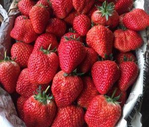 雅金草莓批发基地