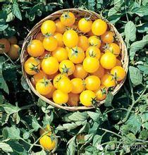 富菜园果蔬采摘