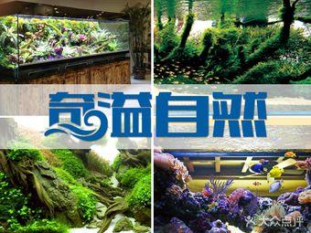 奇溢自然水族馆鱼缸造景(凯旋店)