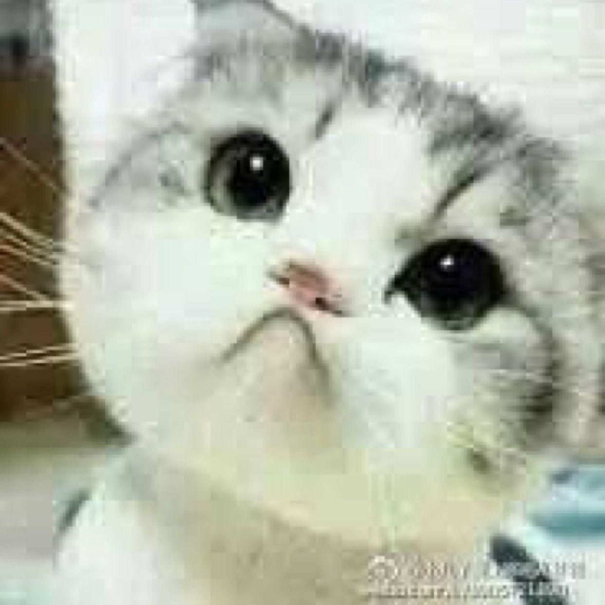 一只猫的表情包图片