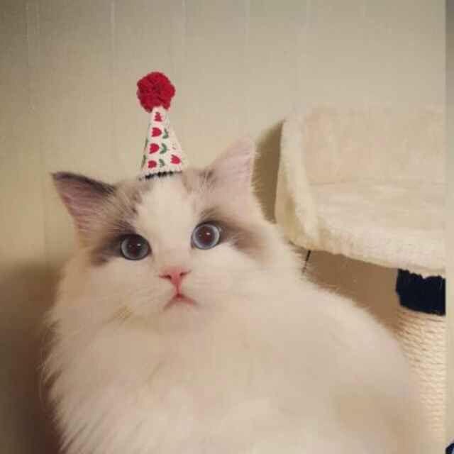 戴圆框眼镜的可爱猫