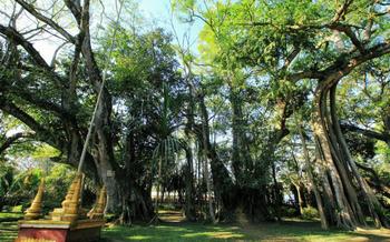 【瑞丽市】莫里热带雨林风景区-美团