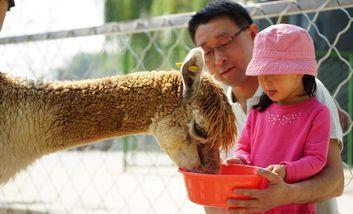 【朝阳公园】朝阳公园亲子动物园-美团