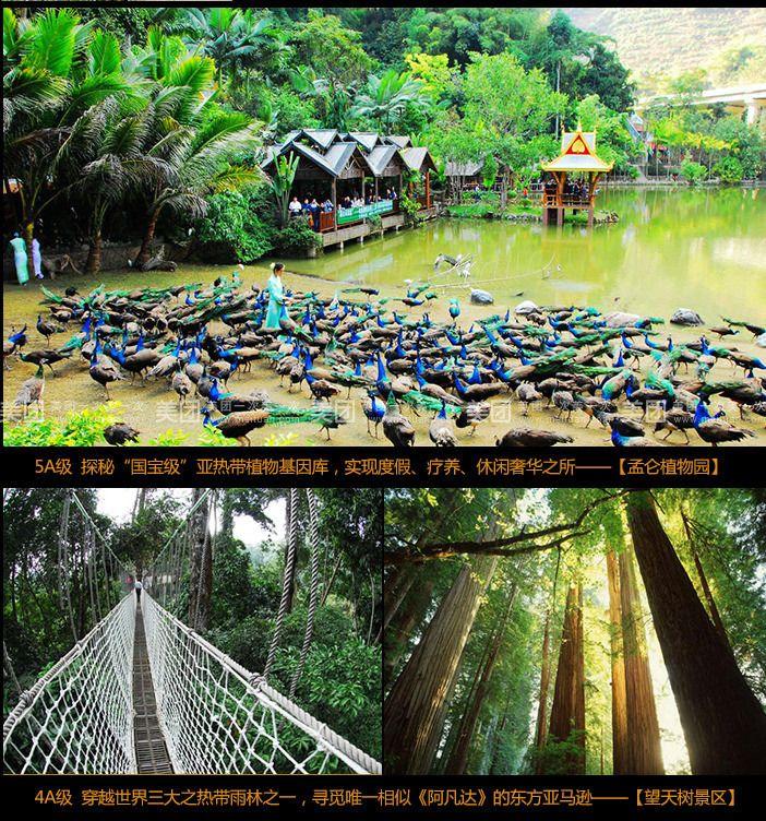 云南旅游 昆明西双版纳孟仑植物园之旅6日游(昆明直飞版纳 穿越望天树