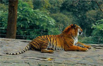 【动物园】重庆动物园—手机智能导游讲解(景点讲解,线路导航)(不含门票)-美团