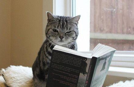 【图】原猫看书