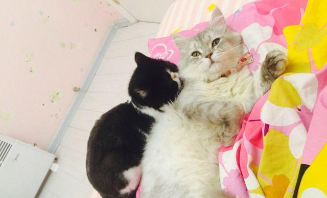 多啦A梦宠物店猫咪寄养费,仅售20元!价值40元的猫咪寄养费1次,提供免费WiFi