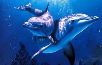 【大小梅沙】深圳小梅沙海洋世界深海精灵体验馆(成人票)-美团