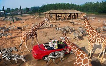 【富阳区】杭州野生动物世界套票学生票-美团