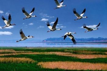 【鄱阳县】鄱阳湖国家湿地公园-美团