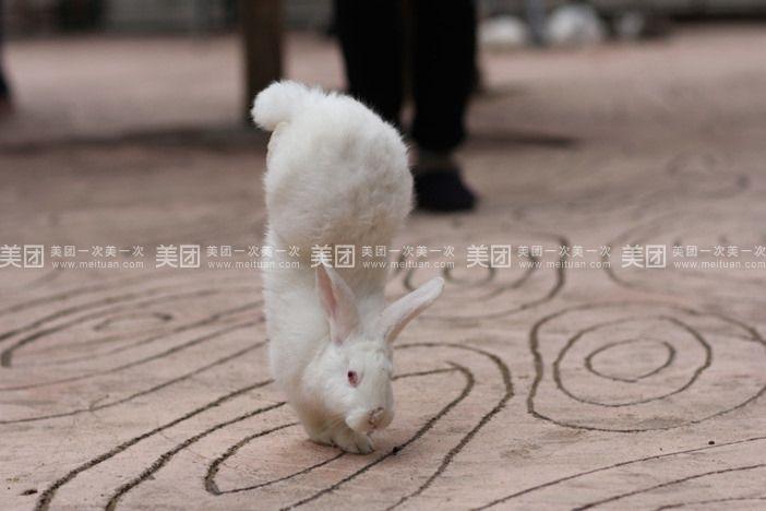 【柳州柳州市动物园团购】柳州市动物园