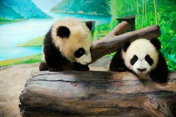 【野生动物园】上海野生动物园门票+摩天轮票+探秘动物-老虎扑食成人票-美团