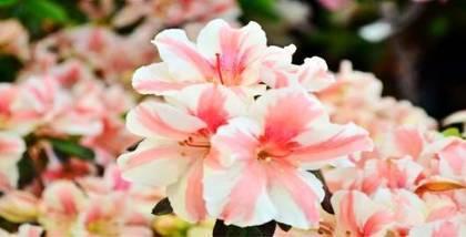 【天河客运站】华南植物园-美团