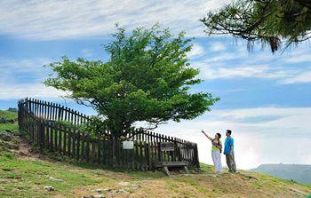【夷陵区】百里荒生态旅游区门票(成人票)-美团