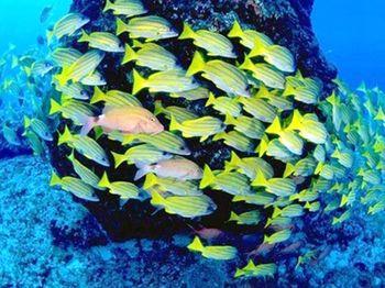 【蠡园/太湖景区】海底世界-美团