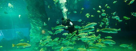 【黄金海岸】圣蓝海洋公园双人票-美团