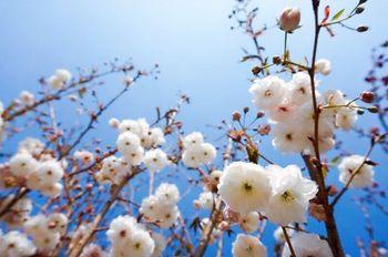 【花都区】美林湖生态园开心农场樱花门票(成人票)-美团