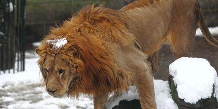 【婺城区】金华动物园成人票含10游玩项目-美团