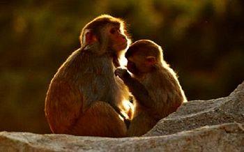 【八达岭】八达岭野生动物园门票(儿童票)-美团