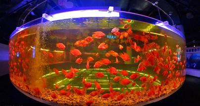 【工体】富国海底世界(含俄罗斯美人鱼和海狮表演)(成人票)-美团