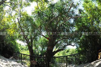 【三亚出发】大小洞天、南天热带植物园纯玩1日跟团游*包含接送+门票+导游-美团