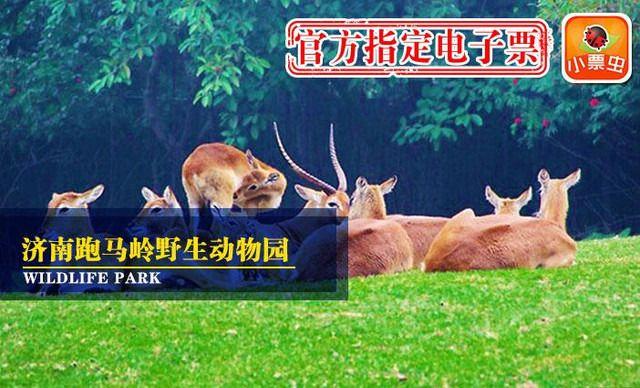 烟台野生动物园团购,烟台野生动物园打折优惠