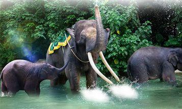 【番禺区】广州长隆野生动物世界周末/节假日门票(亲子票1大1小)-美团