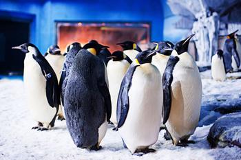 【全国】青岛极地海洋世界极地馆+欢乐剧场门票亲子票1大1小票-美团