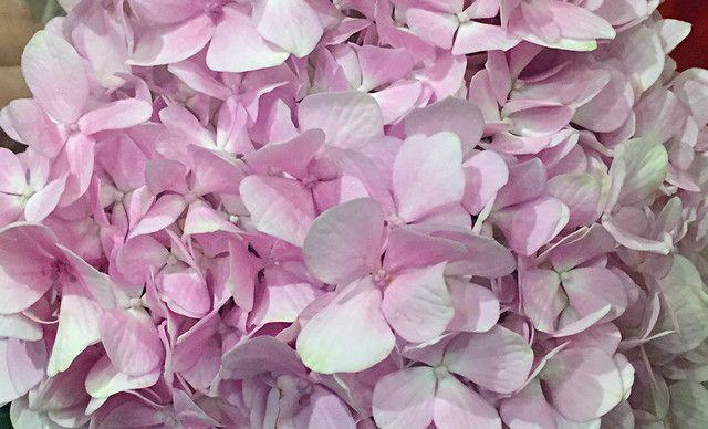 【三迈花町】粉色绣球花,提供免费wifi