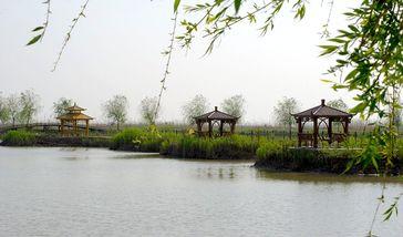 【高邮市】高邮湖芦苇荡湿地公园-美团