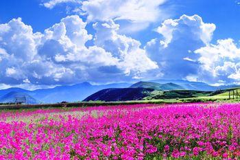 【丽江出发】香格里拉景区、普达措国家公园、香格里拉虎跳峡风景区等纯玩2日跟团游*探秘精品二日游-美团