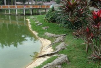【渝北区】重庆鳄鱼中心门票(成人票)-美团