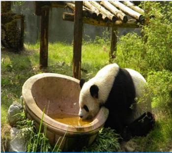 【下渚湖】下渚湖湿地熊猫馆门票(成人票)-美团