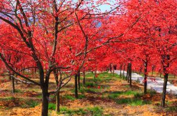 【大礼堂】五洲生态园门票(成人票)-美团