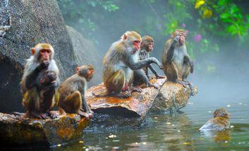 【三亚出发】南湾猴岛、椰田古寨纯玩1日跟团游*包含索道+船票+表演-美团