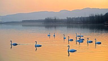 【新乡出发】天鹅湖、豫州地坑院纯玩1日跟团游*天鹅湖+地坑院-美团