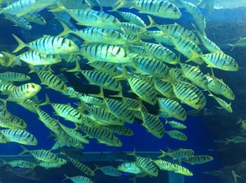【双流区】海滨城浩海立方海洋馆-美团